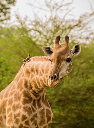 Excursies Senegal: safari