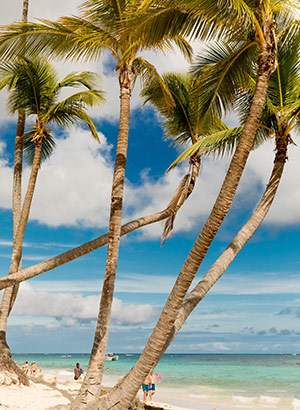 redenen Dominicaanse Republiek: palmbomen