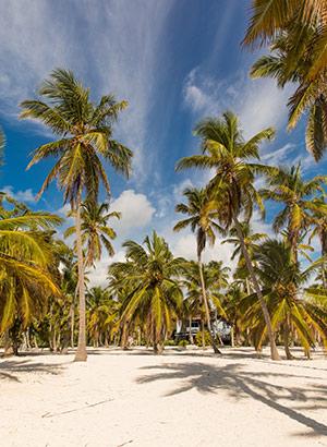 Saona, Dominicaanse Republiek: strand