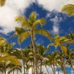Punta Cana, het palmbomenparadijs van de Dominicaanse Republiek