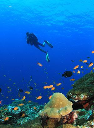 Redenen vakantie Egypte: duiken