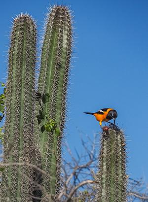 Christoffelpark Curacao: natuur