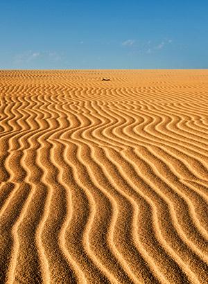 Dagtripjes & excursies op Fuerteventura: duinen van Corralejo