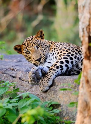 Natuur Sri Lanka; Nationaal Park