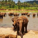 Sri Lanka; een ongekend natuurparadijs