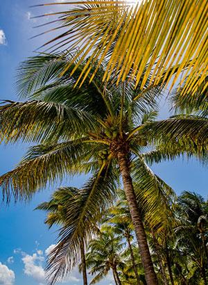 Praktische tips Mauritius: reistijd
