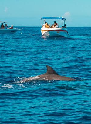 Mauritius met kinderen: dolfijnen
