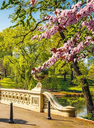 Alles over Central Park, New York