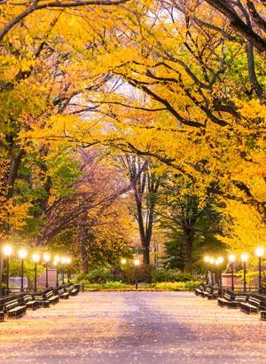 Central Park, New York: feitjes