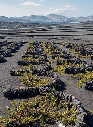 Wat te doen Lanzarote: wijngebied La Geria