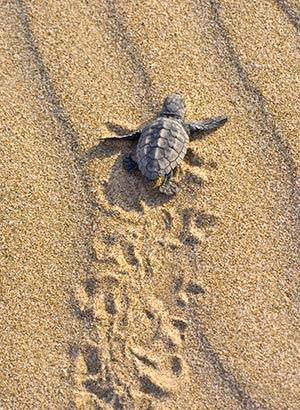 Schildpadden Zakynthos, Turtle Island