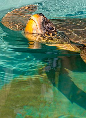 Lycische Kust met kinderen - schildpadden