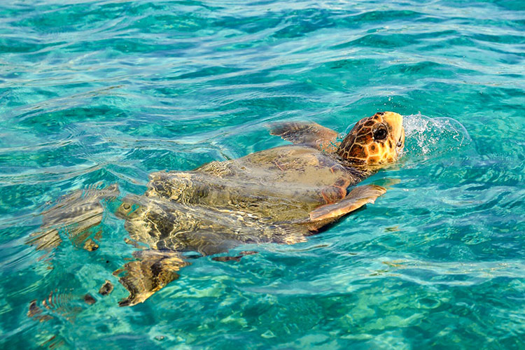 Boot huren Zakynthos: schildpadden