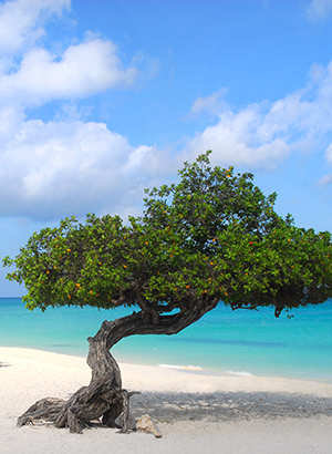 redenen vakantie Aruba: strand
