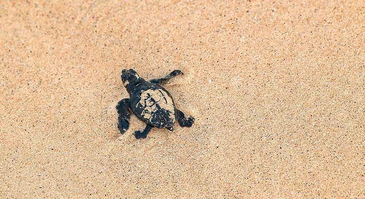 schildpadden Kaapverdië