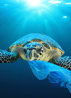 Schildpadden spotten op Kaapverdië