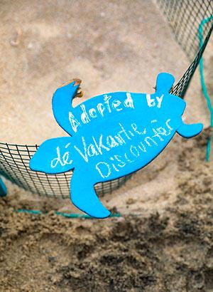 Schildpadden spotten Kaapverdië