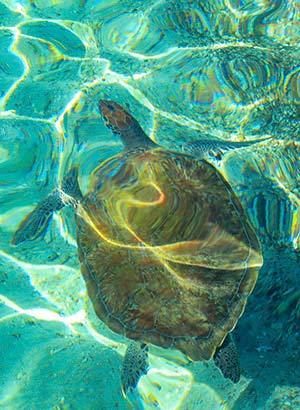 Doen op Curaçao: schildpadden