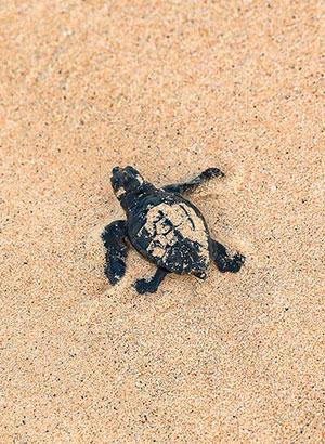 Doen op Sal - schildpadden spotten