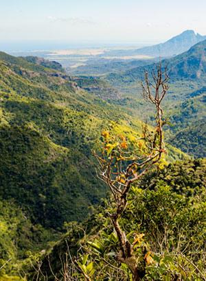 Weetjes Mauritius: groen