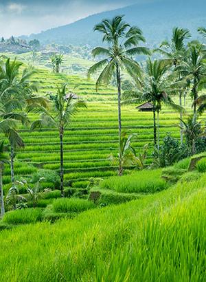 Populaire eilanden Instagram: Ubud