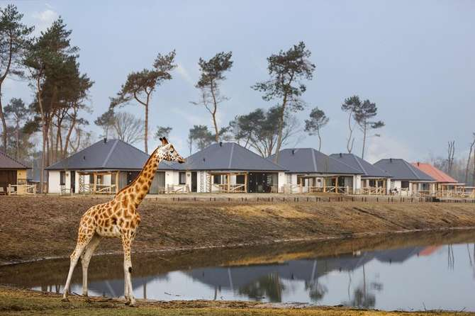 Safari Resort Beekse Bergen Hilvarenbeek